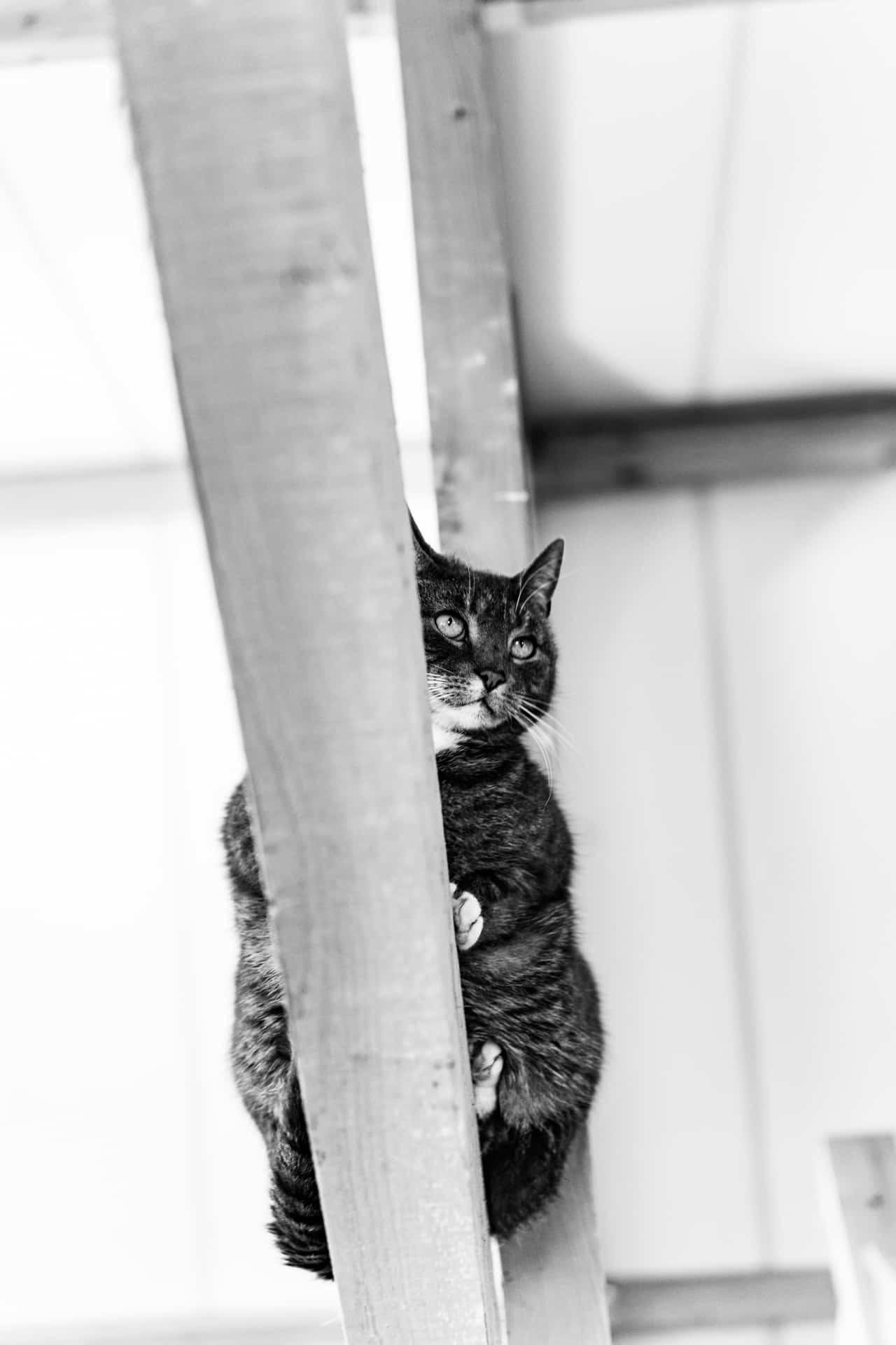 Kat zwart-wit fotografie huisdier